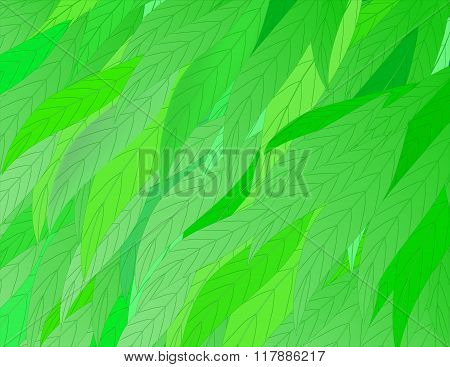 Background Of Light-green Leaves