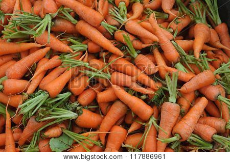 Many Carrot - Background