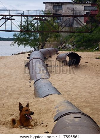 Brown And Black Dog On Sandy Beach At The Bank Of Parana River