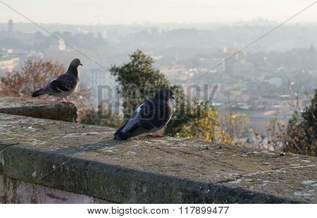 Pigeons Of Rome