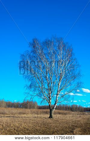 Landscape With A Lonely Birch.