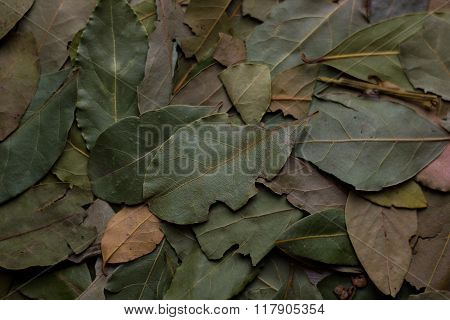 macro bay leaves for kitchen