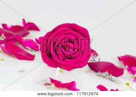Pink Rose With Rose Petals