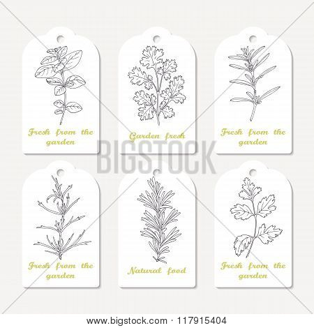Tags collection with hand drawn spicy herbs oregano, cilantro, savory, tarragon, rosemary, parsley
