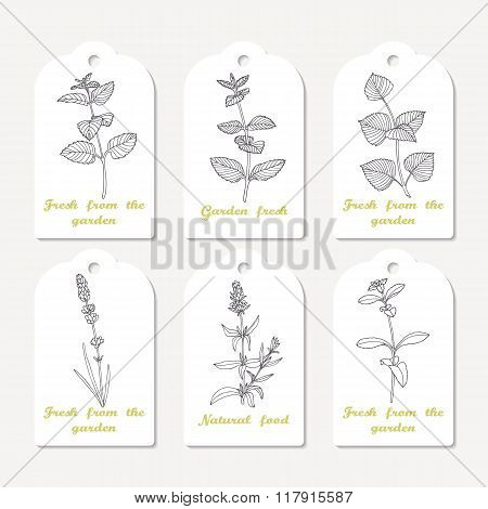 Tags collection with hand drawn spicy herbs melissa, mint, perilla, lavender, stevia, hyssop