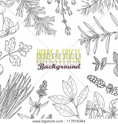 Hand drawn herbs and spices background. Culinary template
