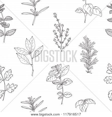 Seamless pattern with hand drawn spicy herbs. Monochrome kitchen background