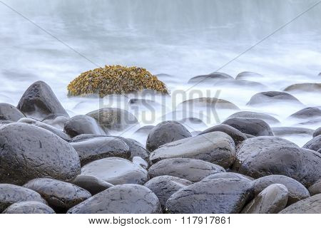 Tranquil Seaweed