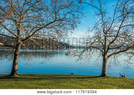 Trees, Lake And Rainier