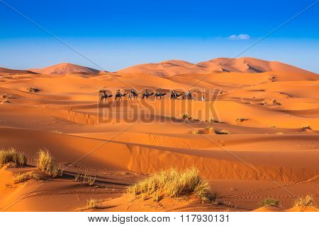 Camel Caravan Going Through The Sand Dunes In The Sahara Desert, Merzouga, Morocco
