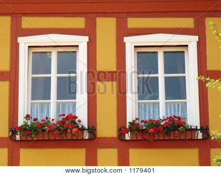 Windows With Geranium