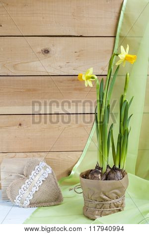 Yellow daffodil and fresh herbs in pots and handmade Valentines Day hearts
