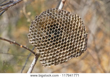 The hornet's nest (Honeycomb)