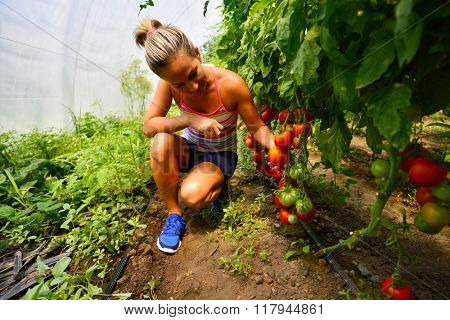 young smiling woman picking fresh vegetables in summer garden