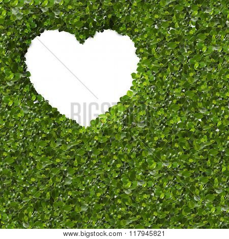 Green Leaves in heart shape on white background. close up
