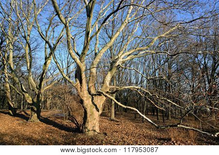 bare tree in the forest