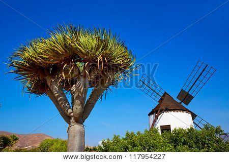Antigua Windmill in Fuerteventura at Canary Islands of Spain