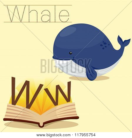 Illustrator of w for whale vocabulary