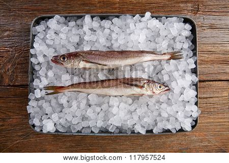 Hake fish on ice tray side view and wooden table