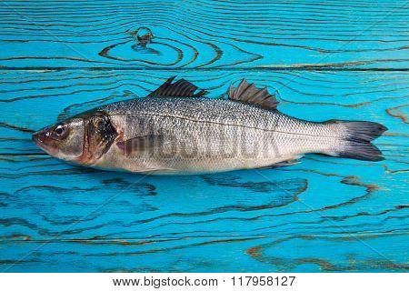 Sea bass fresh fish on wooden aqua table