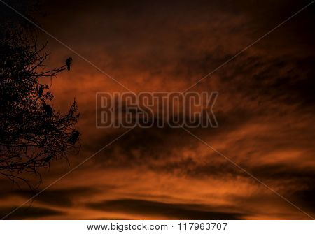 Wild red sunset with large bird life hanging on tree branches
