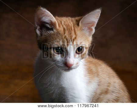 Portrait of a kitten with yellow eyes