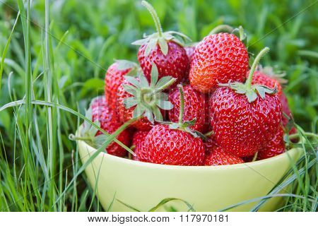 Bowl Of Strawberries On Grass