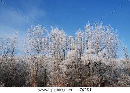trees on an ice cold but clear and sunny winter day