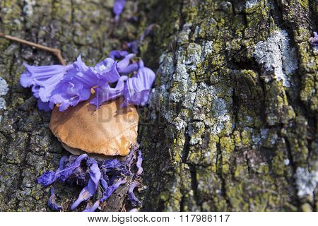 Jacaranda Tree Trunk With Small Flowers And Seed