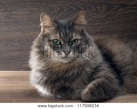 Fluffy, fluffy, big gray cat with bright green eyes