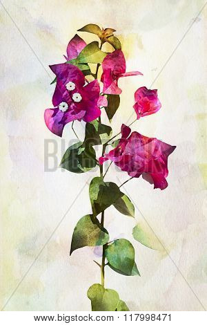 Watercolor Bougainvillea Flowers