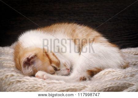 Kitten sleeping sweetly
