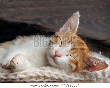 Kitten sleeping sweetly