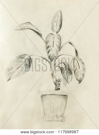 Hand drawn ropical plants. Plants Dieffenbachia sketch.
