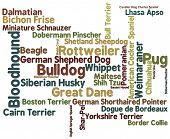 image of bloodhound  - Dog breed themed word cloud on white background - JPG