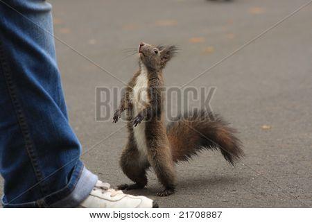 Eichhörnchen wartet, Essen
