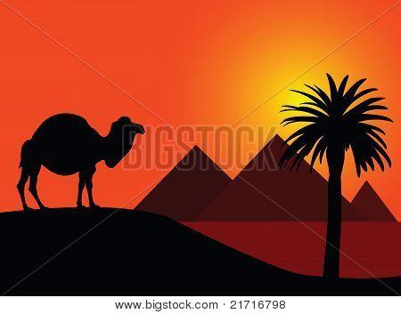 骆驼和金字塔 库存矢量图和库存照片