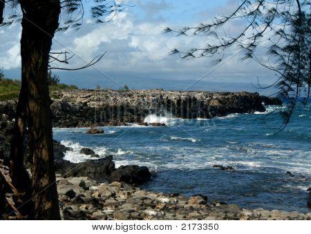 Hawaii In The Wild