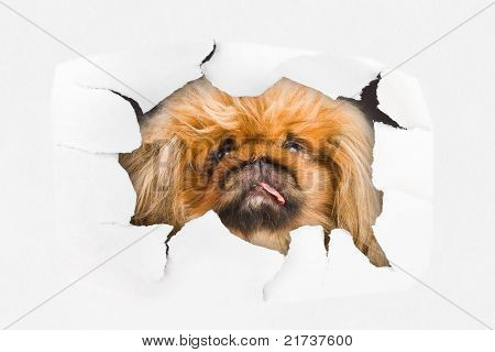 Dog Looking Through Hole On Paper