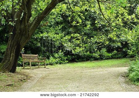 Empty Bench In The Park