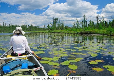 Paddling Through The Lily Pads