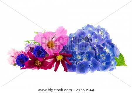 colorful garden flowers as Hydrangea Cosmea and Cornflowers