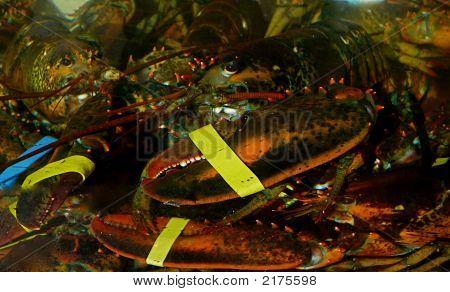 Hummer unter Wasser am Fischmarkt