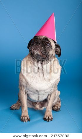 Pug Dog Wearing Birthday Hat