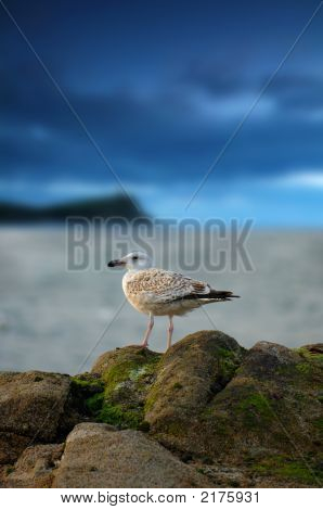 Seagull Rests