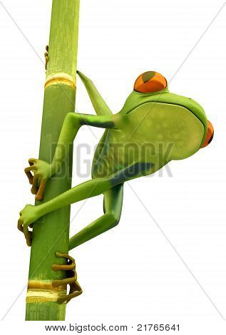 Tree Frog On Bamboo Bole Isolated
