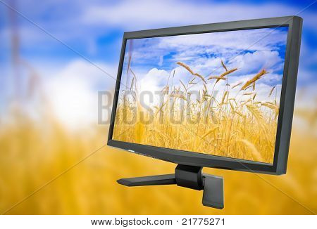 Monitor And Field Of Rye