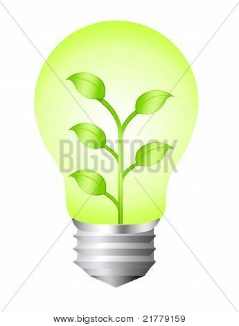 Electric Bulb Nature