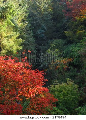 Autumn'S Splendour2