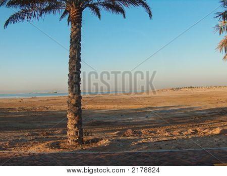 Morning Sun On Palm Tree Near Beach
